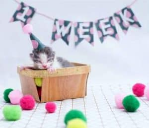 How to Tell How Old a Kitten Is - 1 weeks