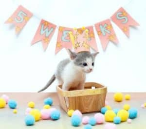How to Tell How Old a Kitten Is - 5 weeks