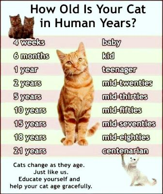 How to Tell How Old a Kitten Is