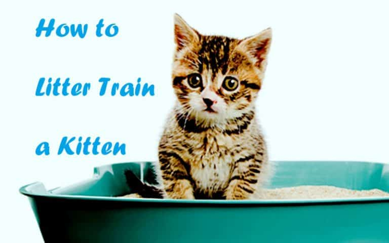 how to litter train a kitten how to litter train a kitten how to litter train a kitten