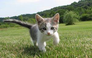 when is kitten season