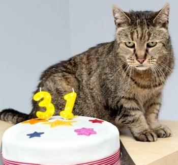 Average Lifespan of a Cat, How Long Do Cats Live?