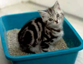 How to Make a Kitten Poop 4