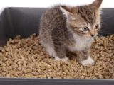 How To Potty Train a Kitten 4