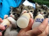 how to bottle feed a kitten