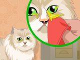 kitten upper respiratory infections