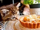what can kitten eat 2