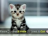 when does a kitten become a cat